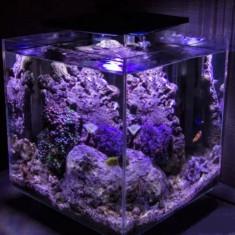 Рифовый нано-аквариум PRIME 32 литра