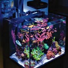 Морской нано аквариум 60 литров.