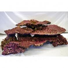 Камни живые Real Reef Shelf Rock плоские (кг.)