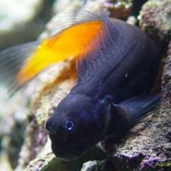 Рыбы-собачки