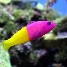 фото рыбы морские